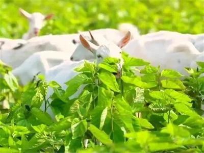 奶源篇 | 有機珍稀好奶源締造高端品質好羊奶!