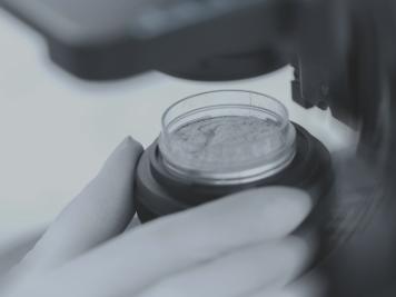 蒙佩尔兰坚持高品质益生菌,优质成分与技术并进